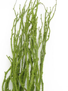 """Picture of Birch Large Moss Covered 36""""-48"""""""