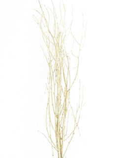 """Picture of Birch Large Painted Gold 36""""-48"""""""