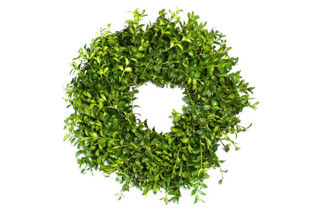 """Picture of Boxwood 18"""" Wreath"""
