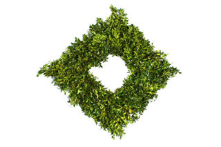 """Picture of Boxwood 20"""" Square"""