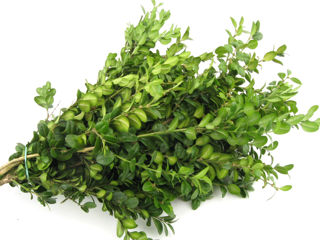 Picture of Boxwood German Bunch