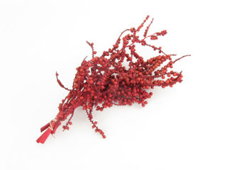 Picture of Canella Berries Red