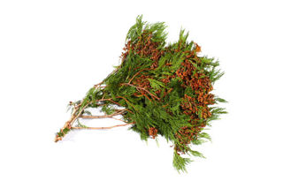Picture of Cedar Coned Bunch