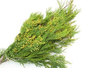 Picture of Cedar Incense Case