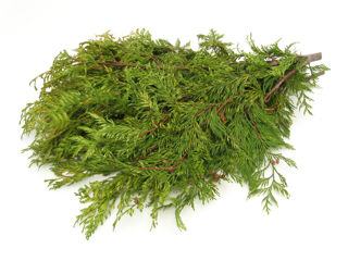 Picture of Cedar Variegated Bunch