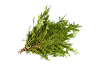 Picture of Douglas Fir Bunch