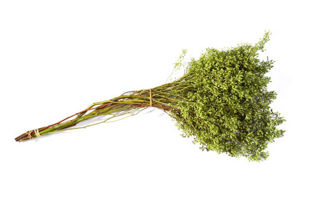Picture of Eucalyptus Seeded Naked