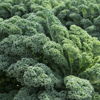 Picture of Kale Prism