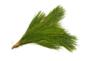 Picture of Long Needle Pine Bunch