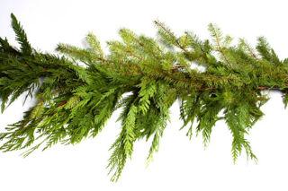 Picture of Mixed Cedar/Douglas 25'