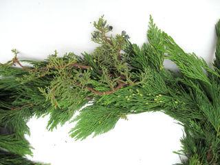 Picture of Mixed Cedar/Princess Pine 75'