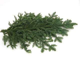 Picture of Noble Fir Bale