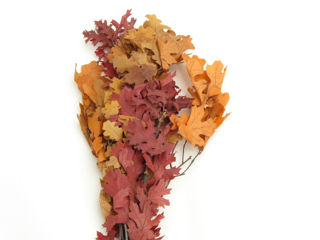 """Picture of Oak Leaves Autumn 24"""""""