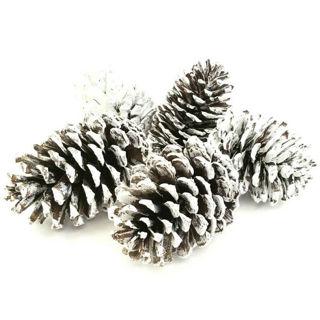 Picture of Pine Cone Sugar Loose