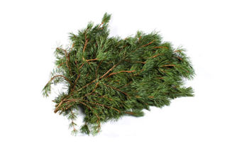 Picture of Scotch Pine Bale