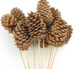 Picture of Pine Cone Large Natural