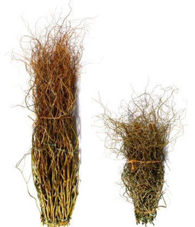 """Picture of Curly Willow Tall Green 60""""-84"""""""