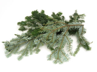 Picture of Silver Fir Bale