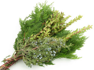 Picture of Sleeved Bouquet-Cedar Juniper Huck