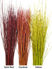 """Picture of Dogwood Yellow Tips 24""""-36"""""""