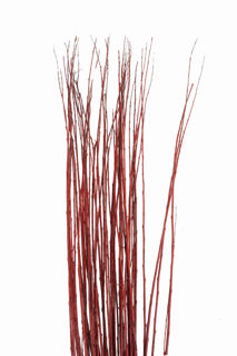 """Picture of Flame Willow Burgundy Dried 48"""""""
