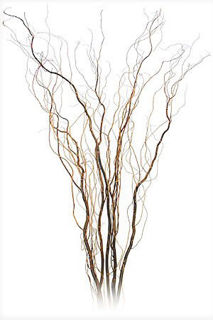 "Picture of Curly Willow Dried Medium 48""-60"""