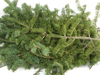 Picture of Concolor Fir Bale